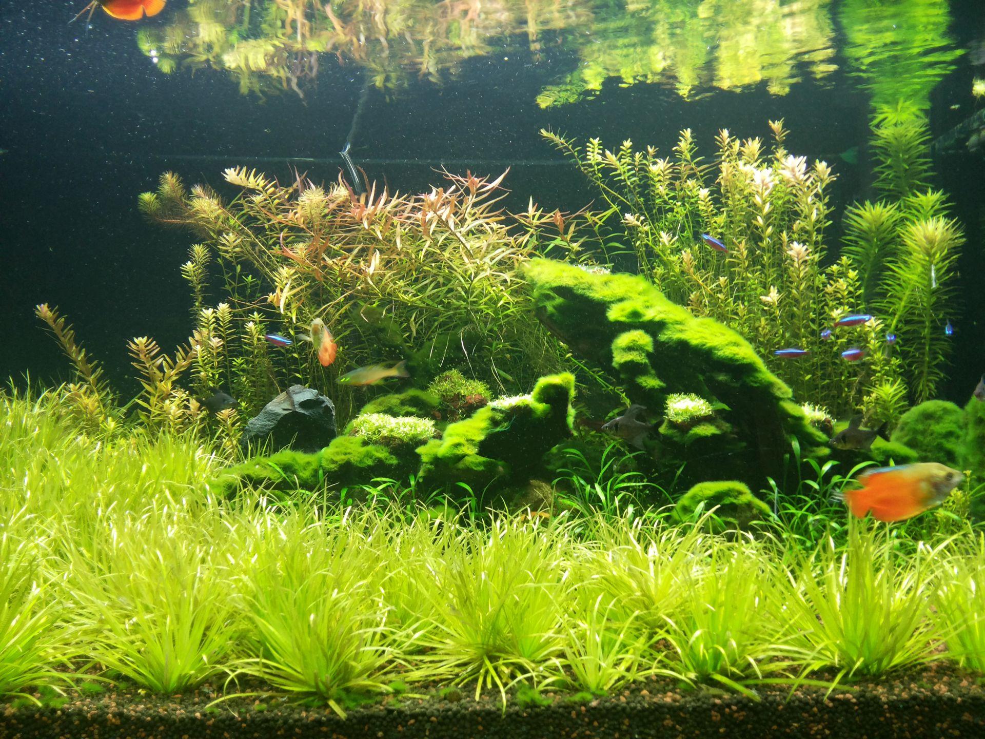 Fish aquarium in ecr - Layout 05